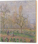Orchard At Pontoise Wood Print by Camille Pissarro