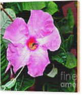 Orchard Colored Mandevilla Wood Print