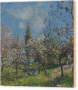 Orchard In Spring Wood Print