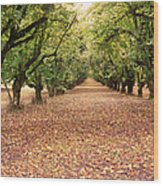 Orchard In The Morning Wood Print