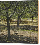 Orchard In West Michigan No. 279 Wood Print