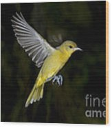 Orchard Oriole Hen Wood Print