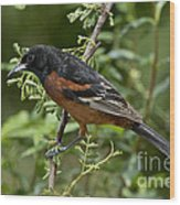 Orchard Oriole Male Wood Print