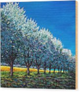 Orchard Row Wood Print by Johnathan Harris