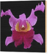 Orchid 002 Wood Print