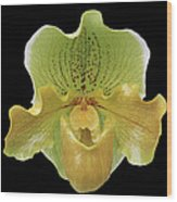 Orchid 003 Wood Print