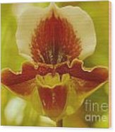 Orchid 124 Wood Print