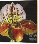 Orchid 130 Wood Print
