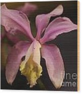Orchid 133 Wood Print