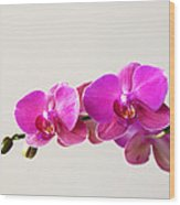Orchid 1345 Wood Print