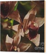 Orchid 137 Wood Print