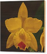 Orchid 139 Wood Print