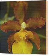 Orchid 140 Wood Print