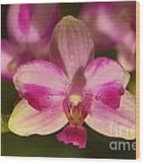 Orchid 144 Wood Print
