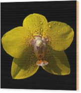 Orchid 15 Wood Print