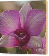 Orchid 152 Wood Print