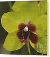 Orchid 153 Wood Print
