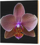 Orchid 17 Wood Print