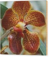 Orchid 195 Wood Print