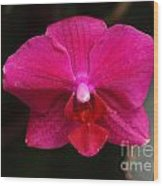 Orchid 199 Wood Print
