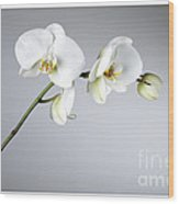 Orchid 1a Wood Print