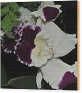 orchid 220 Cattleya Moscombe 'The King'  2 of 3 Wood Print