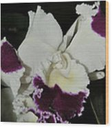 orchid 221 Cattleya Moscombe 'The King'  1 of 3 Wood Print