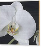 Orchid 2c Wood Print