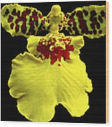 Orchid 33 Wood Print
