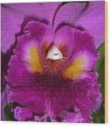 Orchid Flames Wood Print