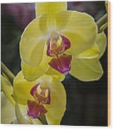 Orchid #5 Wood Print
