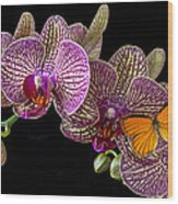Orchid And Orange Butterfly Wood Print