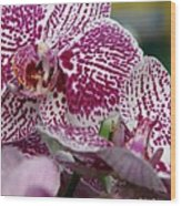 Orchid Art Wood Print