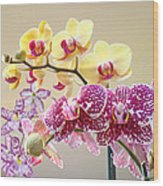 Orchid Art Prints Orchids Flowers Floral Bouquets Wood Print