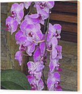 Orchid Beauties Wood Print