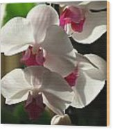 Orchid Beauty Wood Print
