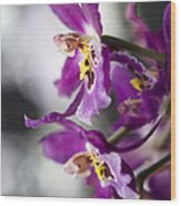 Orchid Blossom Wood Print