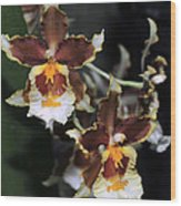 Orchid Brown Yellow White Macro Wood Print