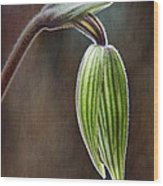 Orchid Bud Wood Print