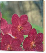 Orchid Bugs Wood Print