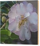 Orchid Camellia Wood Print