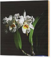 Orchid Cattleya Bow Bells Wood Print