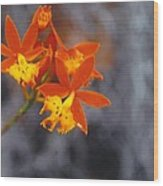 Orchid Circus Wood Print