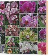 Orchid Collage 1 Wood Print