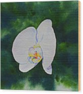 Orchid Dance 1 Wood Print