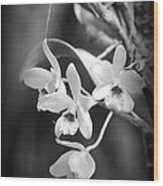 Orchid Delight Wood Print