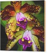 Orchid Elegance Wood Print