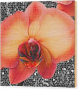 Orchid Explosion Wood Print