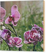 Orchid Field Wood Print by Paula Rountree Bischoff