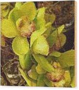 Orchid Flourish Wood Print
